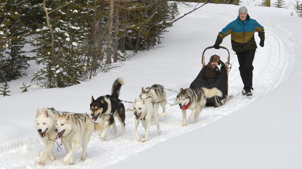 Dog Sledding Adventure Showed Blue Jackets A New Slice Of The World