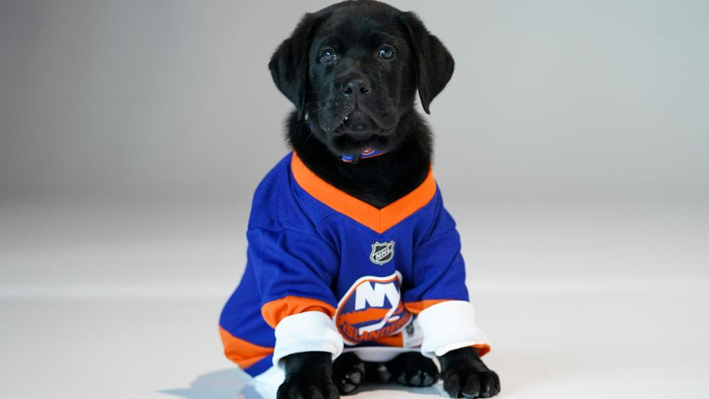 Islanders Partner with Guide Dog Foundation to Raise Third Puppy | NHL.com